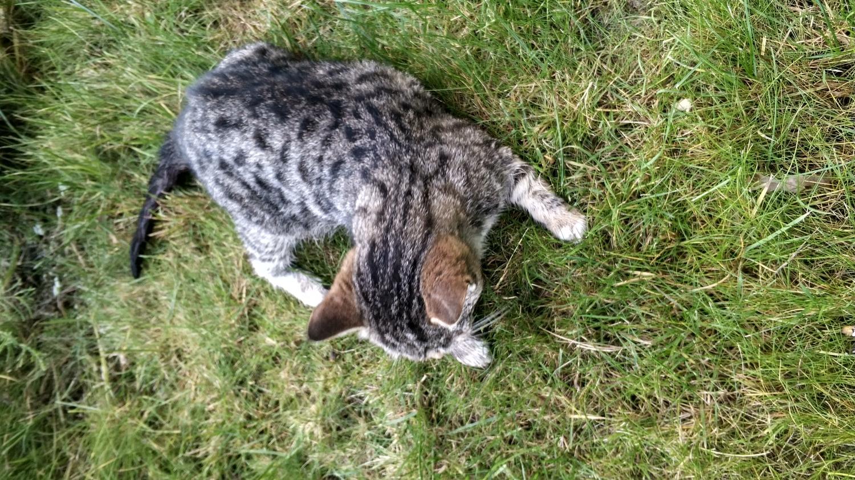 Найден котёнок!