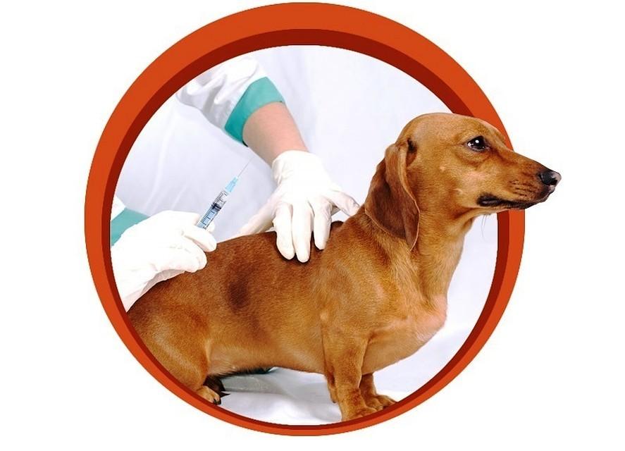 График проведения вакцинации домашних животных против бешенства на прививочных пунктах ЮАО г.Москвы на 2020г