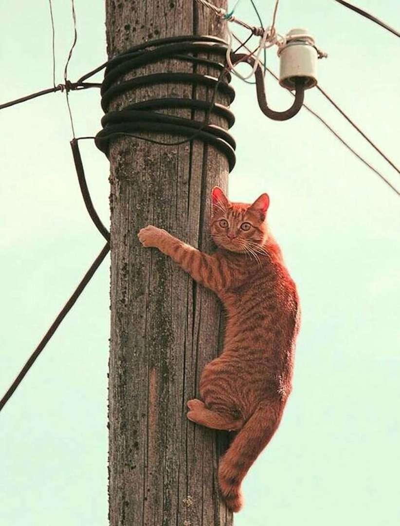 Внимание! Отключение электроэнергии по ул. Дзержинского