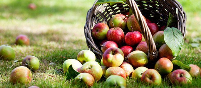 Акция «Осенние яблоки» для пользователей приложения!